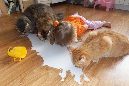Cuộc đua uống sữa. Ai nhanh hơn ai nào ?