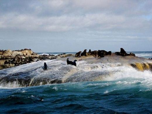 Những hòn đảo tuyệt đẹp chỉ dành cho động vật sinh sống