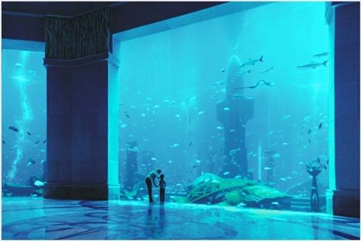 Đến với khách sạn Atlantic, bạn chẳng cần đi đâu xa cũng có thể ngắm thủy cung ở ngay bên trong khách sạn.