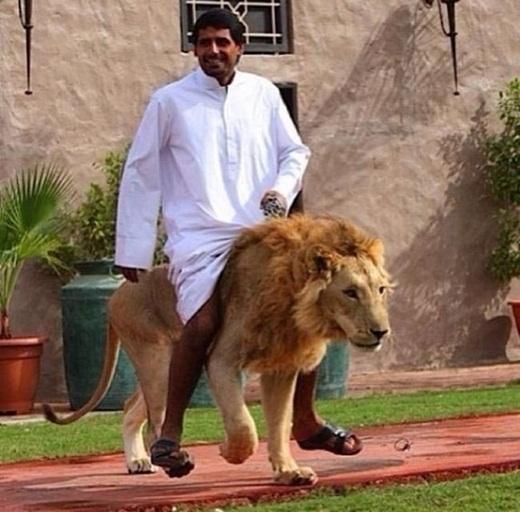 Thay vì chó thì sư tử được xem là thú cưng ở Dubai.