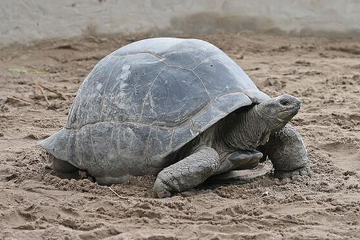 7 loài động vật sống dai nhất quả đất