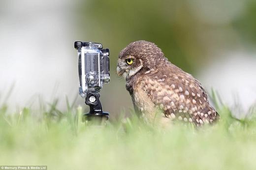 17 khoảnh khắc động vật làm nhiếp ảnh gia cực ngộ nghĩnh