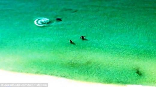 Hai du khách vẫn không hề hay biết mà vẫn vô tư tắm biển.