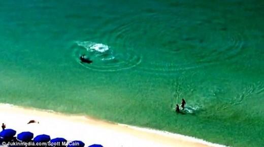 Nhờ một người đứng trên bờ ra hiệu mà hai du khách đã phát hiện ra con cá mập đang tiến về phía mình.