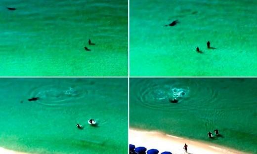 Toàn bộ sự việc cá mập đầu búa suýt tấn công hai du khách đã được camera an ninh vô tình quay lại được.