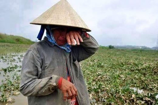 Nỗi khổ cực của người nông dân khi dưa hấu rớt mùa.