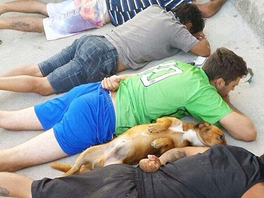Chú chó đáng yêu nằm đầu hàng cảnh sát cùng chủ của mình