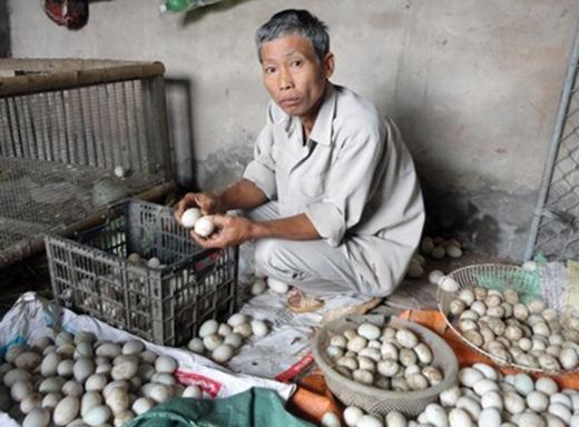 2 vạn trứng của gia đình ông Vũ Văn Năm, ở thôn Lác, xã Giang Biên bị hỏng
