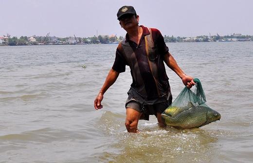 Mỗi ngày, ngư phủ Phước có thể bắt được từ 20 kg đến 50 kg cá các loại