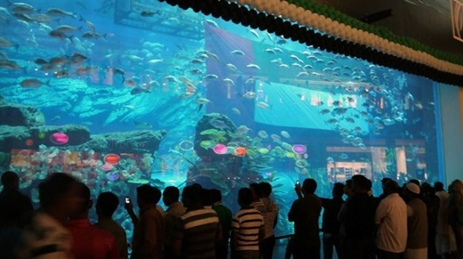 Hồ cá lớn nhất thế giới nằm trong trung tâm mua sắmDubaivới khoảng 33.000 động vật thủy sinh.