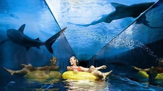 Trượt nước cùng cá mập ở công viên nước Aquaventure ở Dubai.