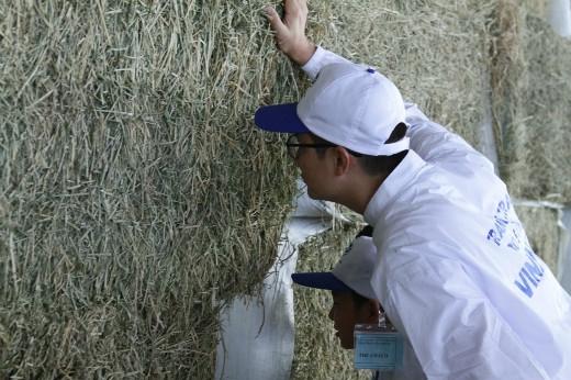 """""""Woah, bố Tê Giác đang thử đoán cỏ khô này là loại cỏ gì chăng?"""""""
