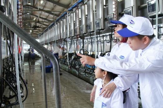 Quy trình chăm sóc chu đáo các cô bò ở trang trại khiến các gia đình rất ấn tượng