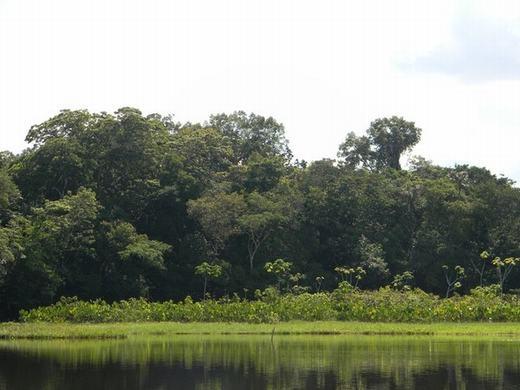 Trong các khu rừng nổi, nhà nghiên cứu sinh thái Carolina Freitas thuộc Trung tâm nghiên cứu tự nhiên Brazil cho biết đây chính là nơi khởi nguồn của các cây thủy sinh và bán thủy sinh phân hủy. Bà biết đến những hòn đảo nổi này lần đầu tiên khi đang khám phá khu bảo tồn Piagaçu-Purus.
