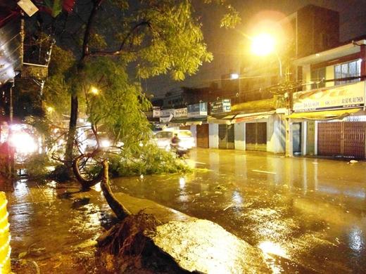 Nếu bão mạnh cấp 10 trở lên thì có gần 250.000 tại TP.HCM phải di tản