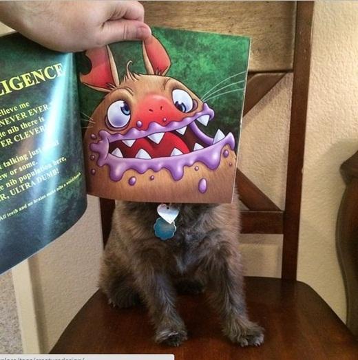 Và thú cưng cũng có thể tham gia trào lưu Bookface.