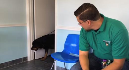 Xúc động với chú chó vui mừng khi gặp lại chủ sau 8 năm