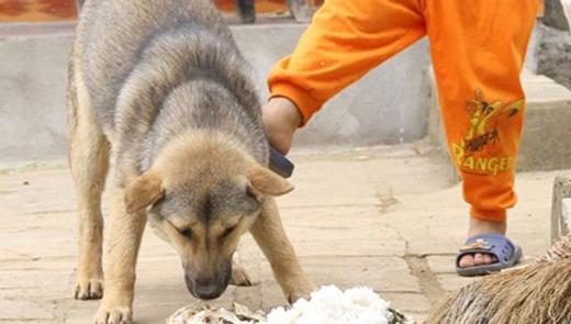 Tuyệt đối không cho trẻ nhỏ lại gần những con vật nuôi như chó mèo vì rất nguy hiểm