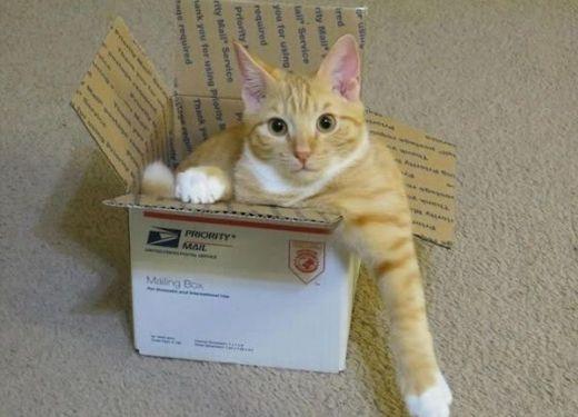 Nếu anh không bước ra khỏi cái hộp đó, tôi sẽ kí gửi anh tới câu lạc bộ Chó bảnh bao đang buồn chán cần thú tiêu khiển ngay lập tức!