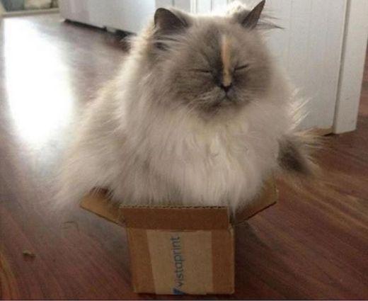 Chiếc hộp này đã tố cáo vòng 3 khiêm tốn của cô!