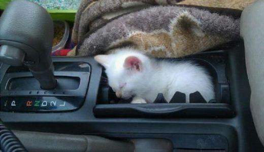 Có đứa lén lén đi ké xe mà còn lo ngủ nghê thấy ghét!