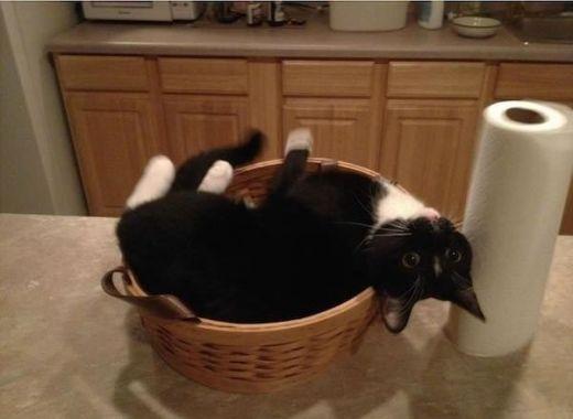 Anh chị vui lòng dọn cơm đến đây luôn cho em được không? Em không muốn bước ra khỏi cái rổ này!