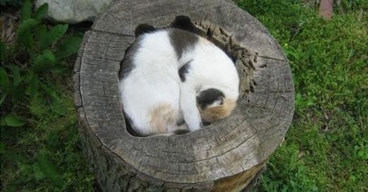Đây là lý do mà cái cây không thể mọc lại được nữa!
