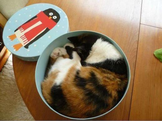 Mèo là chất lỏng, đủ thứ màu và có mùi mèo!