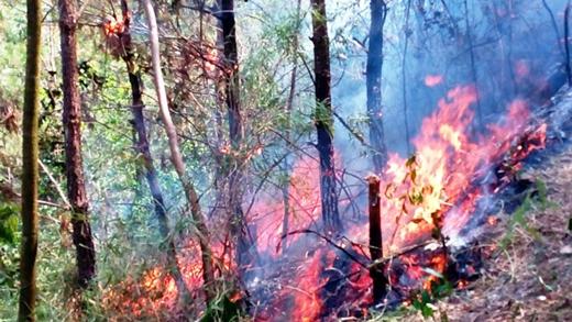 Hiện trường vụ cháy rừng ở Thanh Hóa
