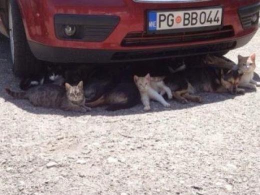 Cả gia đình cùng tránh nắng nào!