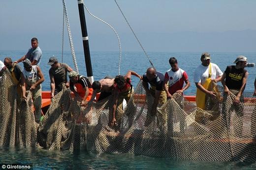 Các ngư dân này ra sức hò hét và kéo mẻ lưới cá nặng đến hàng tấn.