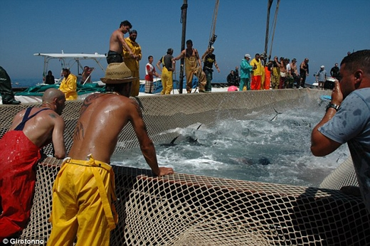Không chỉ có người dân địa phương, lễ hội này còn thu hút nhiều đầu bếp chuyên nghiệp trên thế giới. Họ đến đây để tham gia vào cuộc thi chế biến những món ăn từ cá ngừ. Bên cạnh đó, một số du khách cũng hào hứng tham gia vào lễ hội này và thưởng thức những món cá ngừ tươi ngon của hòn đảo này.