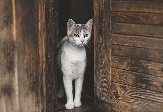 Nhìn chú mèo tội quá. Chắc là đang trông ngóng nàng mèo nào đấy.