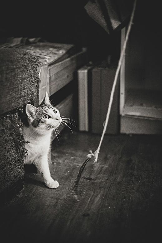 Mèo cũng rất tò mò không kém bất kì loài động vật nào.