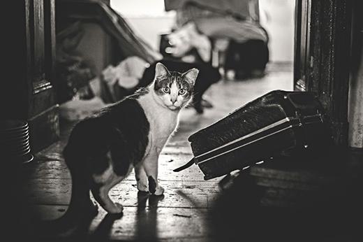Nữ nhiếp ảnh gia đã bị chú mèo phát hiện.