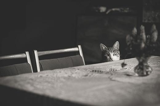 Trên bàn có điều gì đó đang hấp dẫn chú mèo.