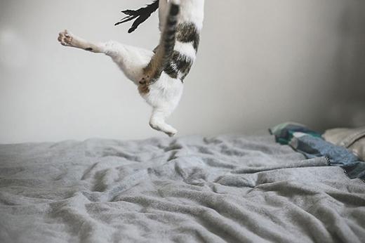 Nhảy cao quá nên chú mèo lộ hàng mất rồi.
