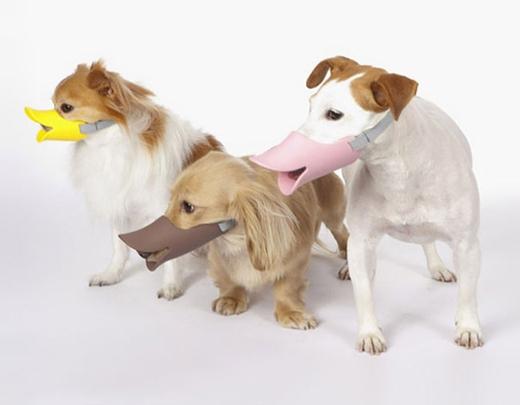Dụng cụ bảo vệ người xung quanh khỏi nỗi sợ cún