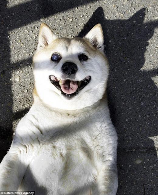 Nụ cười củaCinnamonđược mệnh danh là nụ cười thiên sứ