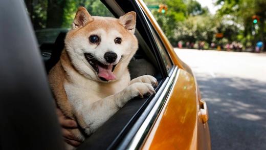 Cinnamonrất thích thú khi được bố mẹ cho đi xe hơi
