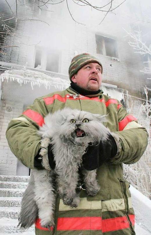 Một nhân viên cứu hỏa Nga giải cứu một chú mèo đang sợ hãi khỏi vụ cháy.