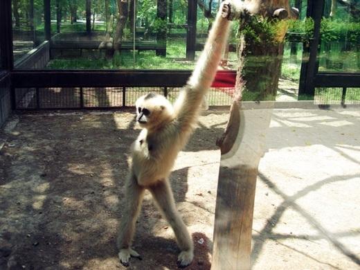 Siêu mẫu của cả vườn thú là đây.