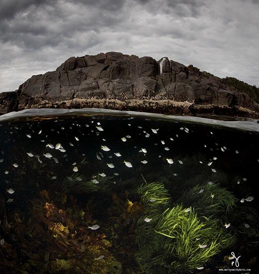 Ấn tượng một thế giới song song đầy mê hoặc trong bộ ảnh dưới nước