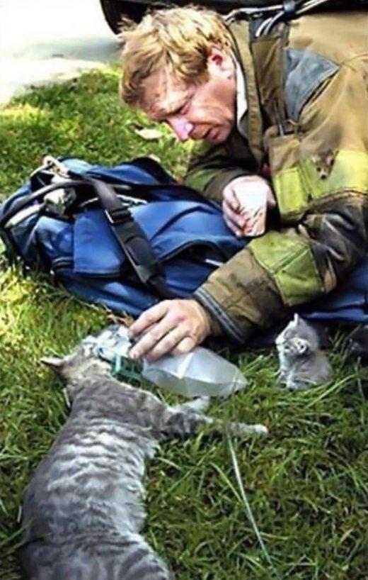 Một người lính cứu hỏa đang đặt mặt nạ ôxy lên mèo mẹ để giúp mèo mẹ thở dễ dàng hơn.