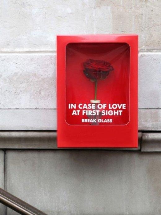 """Hoa hồng dành cho """"tình yêu từ cái nhìn đầu tiên""""."""