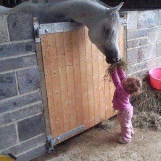 Em bé đang đút cỏ cho chú ngựa ăn.