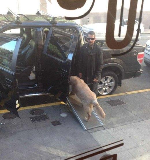 Người đàn ông với sáng kiến đặt tấm kiếng để cho chú chó của mình có thể lên xe dễ dàng hơn.