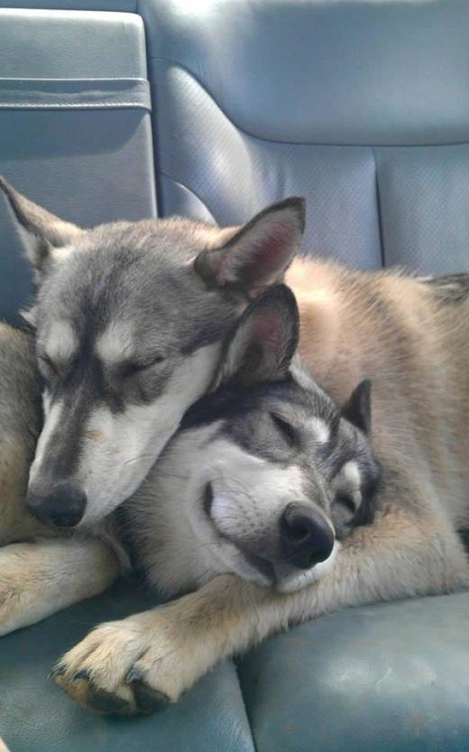 Bạn có ai đó để ôm lúc ngủ như thế này không?!