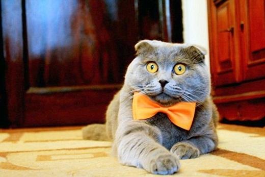 Kinh ngạc với công ty thuê một chú mèo làm…giám đốc truyền thông