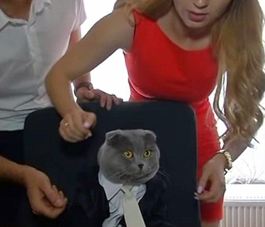 Những ứng viên ứng tuyển vào vị trí này đều kinh ngạc khi biết rằng mình đã thua...một chú mèo